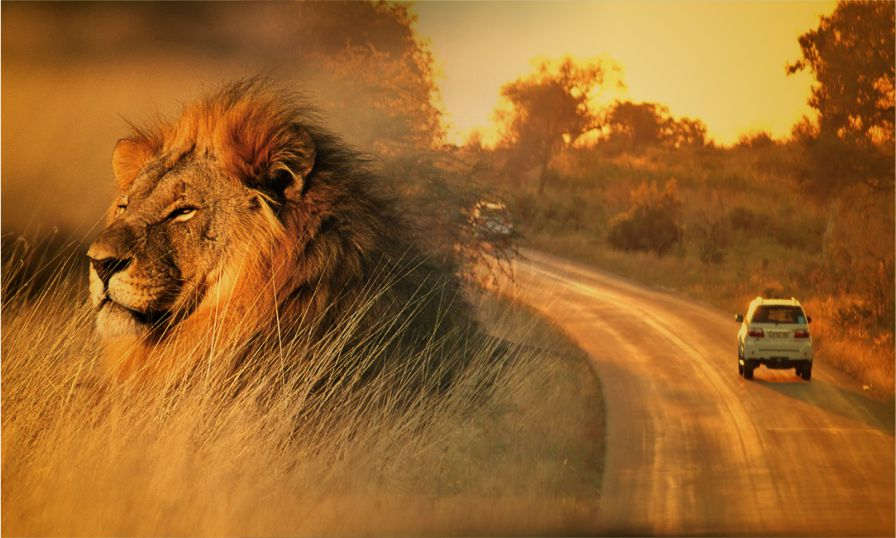 A Drive withLions